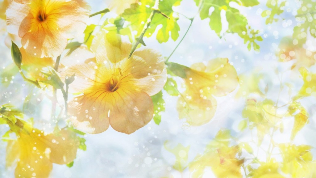 Yellow Flowers of Beauty