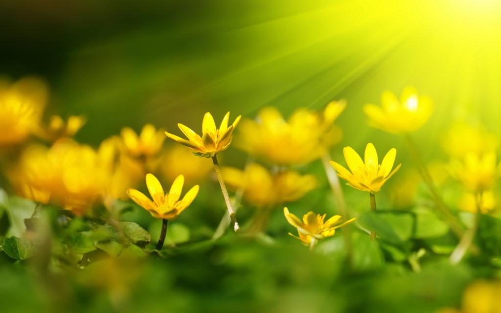 Yellow Heaven Florals