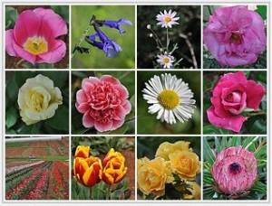 flowermosaic_kathie_thomas